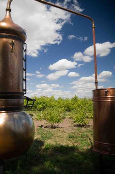 Destille für eines Hydrolat