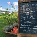 Kürbis schnitzen in Holzhausen